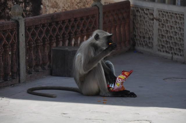 India_Trip_446