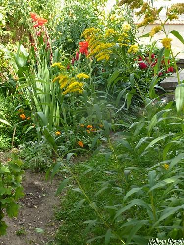 Au jardin durocasse