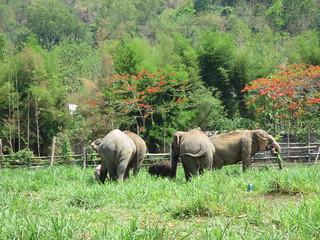 Elephants free