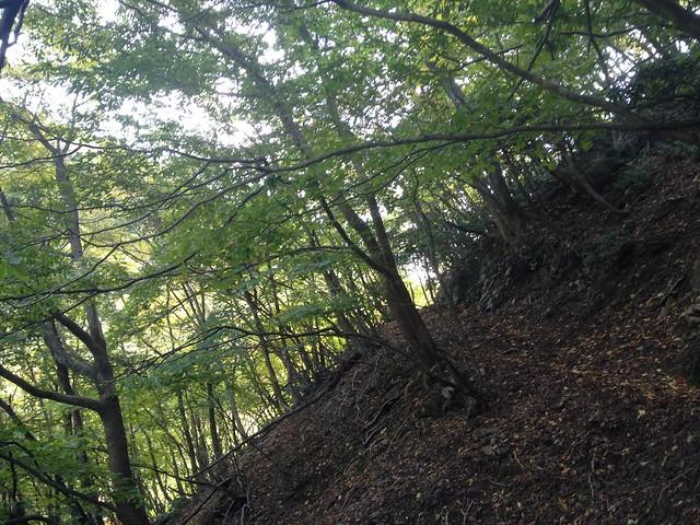 笙ヶ岳 登山道