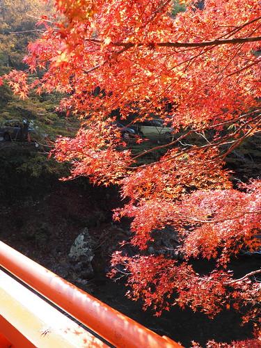 高雄 指月橋と紅葉