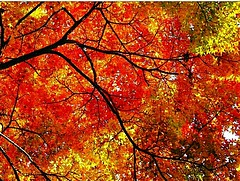when the leaves get color winter is just around the corner