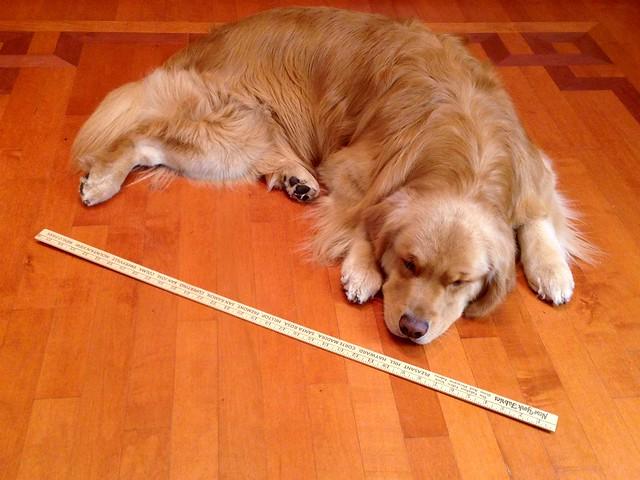Length of Henry