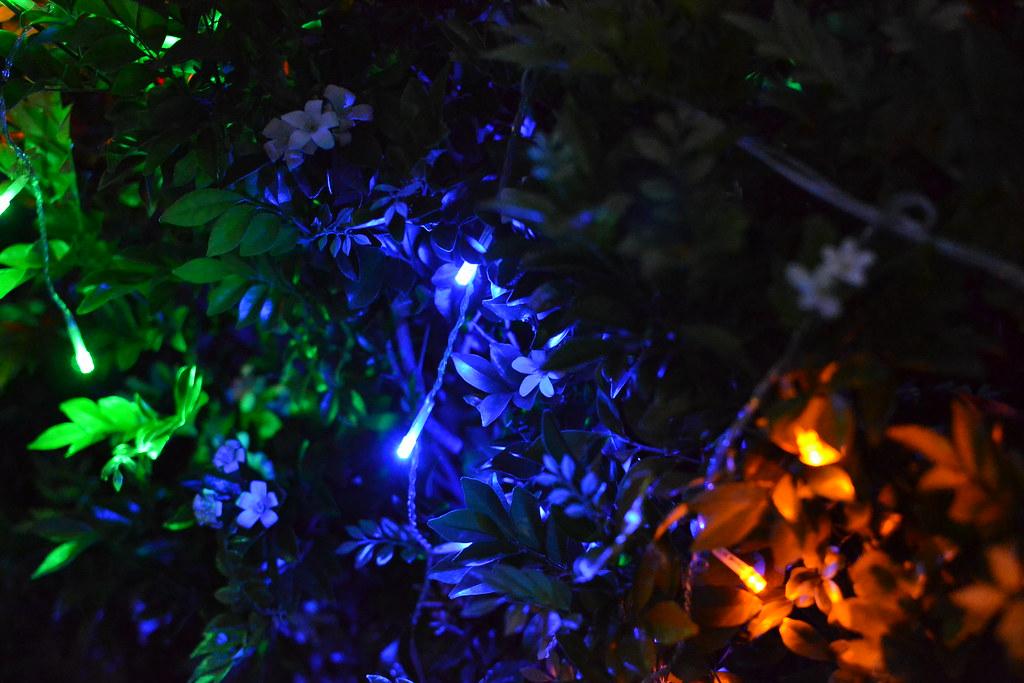 Christmas lights on a bush