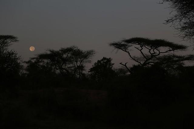 Moonset at Turmi campground