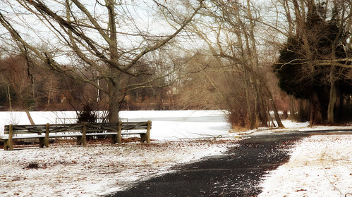 trees winter lake snow cold tree ice nature bench landscape outdoors frozen pond path walkway dreamy lonely icy passage barren isolated wintry