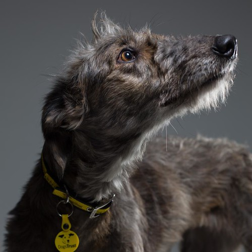 Dogs Trust - Angel