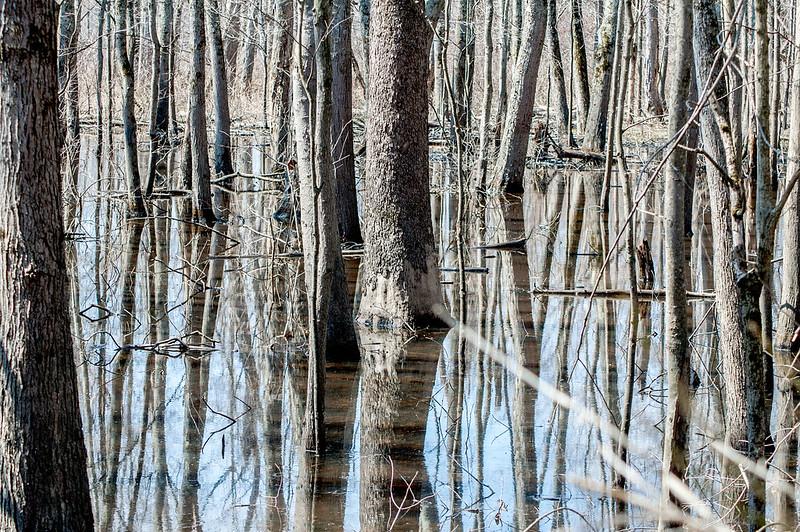 Stillwater Marsh - March 20, 2014