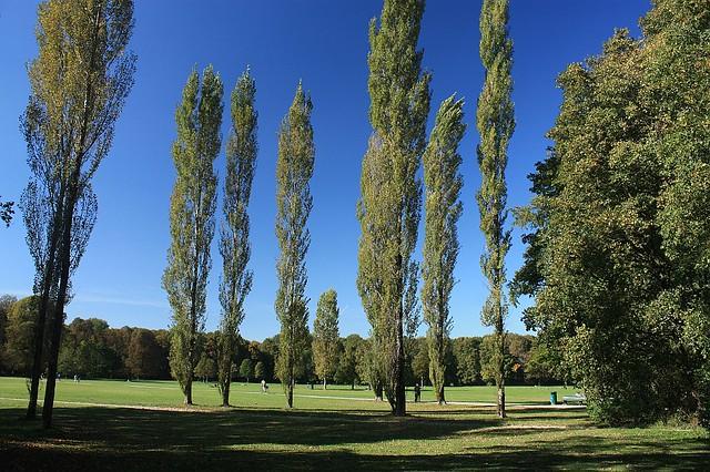 Englischer Garten, English Garden, Muenchen, Munich, Germany