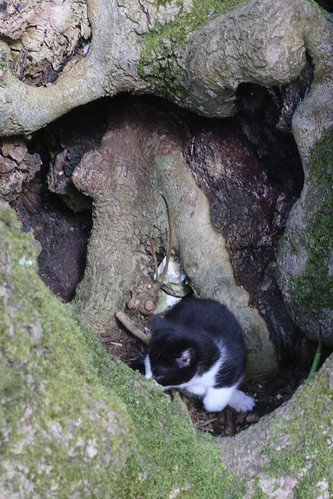 Tree stump full o' kittens