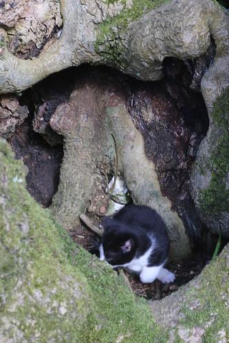 Tree stump full o' kittens