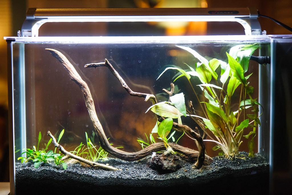 lighting schedule in a low light aquarium