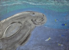 Mr Hunt: Save Our Seas, Day 4 - Dugong