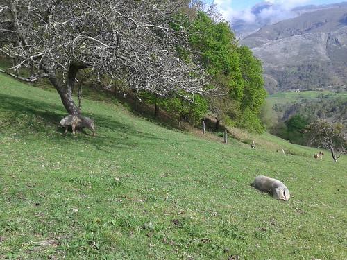 Granja Xuan Valladares, Asturias Sostenible