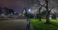 Lower Senate Park Cherry Blossoms