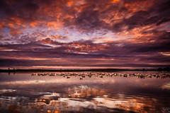 Geese Resort