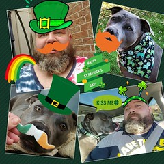 It looks like a bunch of leprechauns had an orgy. ☘☘☘☘☘☘ #stpatricksday #bonnie_blue_staffy #bonnie_blue_bullie #staffysofinstagram #pitbullsofinstagram #dogsofinstagram #showmeyourpitties #dontbullymybreed #endbsl #lovernotafighter #daddysgirl #cuteness