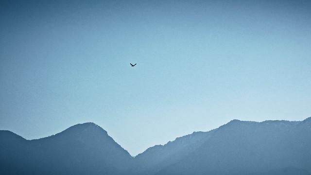 A distant crow above ridge