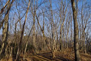 冬枯れの快適な尾根道