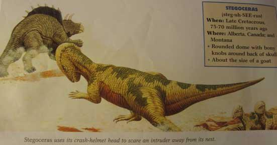 _Prehistoric World_ Series - Pachycephalosaurus