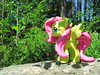 Fluttershy standing on a rock