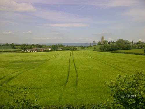 england somerset tower church farmland farm crops outdoors view scenery wildlife countryside