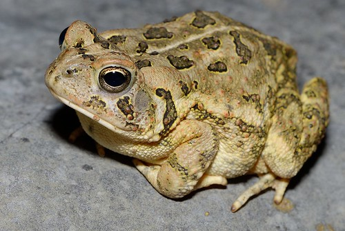 Toad 2013-06-20b