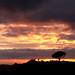 Sunset over Hollywood. by Derek 39