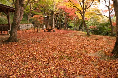 【写真】紅葉 : 笠置山もみじ公園