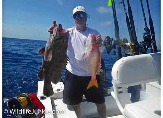 Bahamas Grouper