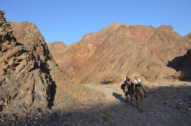 Paseo en camello por el desierto del Néguev