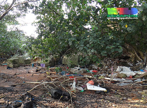 Mangroves at Kranji - trash and marine debris