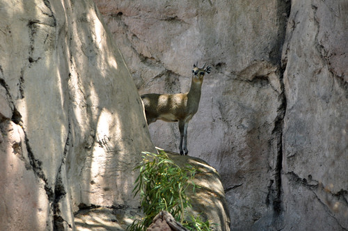 San Diego Zoo #8