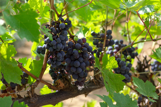 Yamanashi Japan  city pictures gallery : Winery