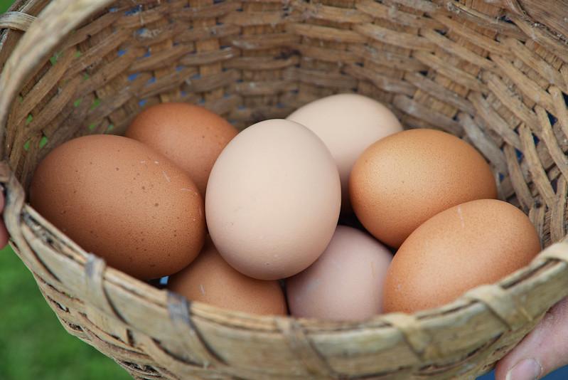 Експорт курячих яєць з України підскочив майже вдвічі