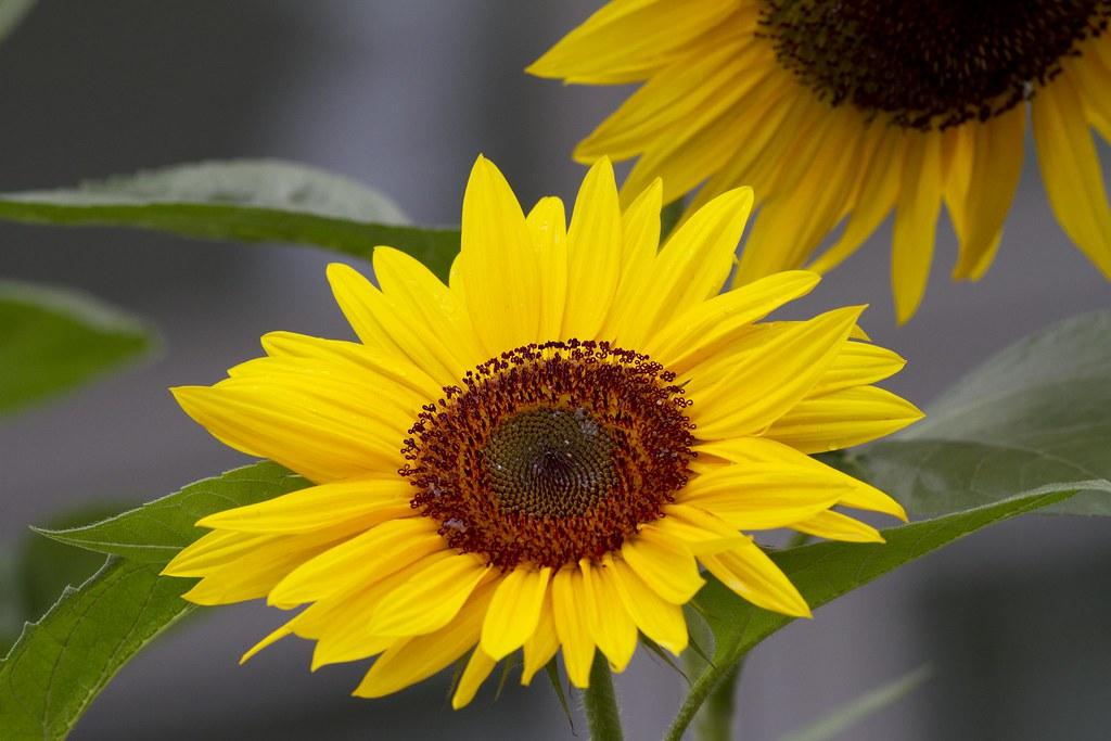 IMAGE: http://farm4.staticflickr.com/3762/9633534846_2856ea2554_b.jpg