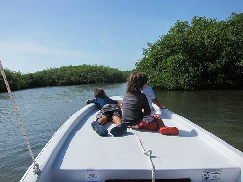 Through the mangroves.