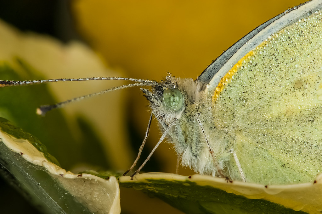 Focus Stack Of A Live Butterfly At Very Early Morning