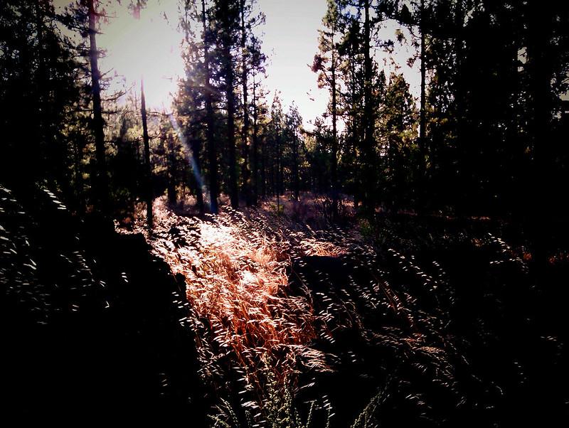 pinos y lava. agosto 2013.22