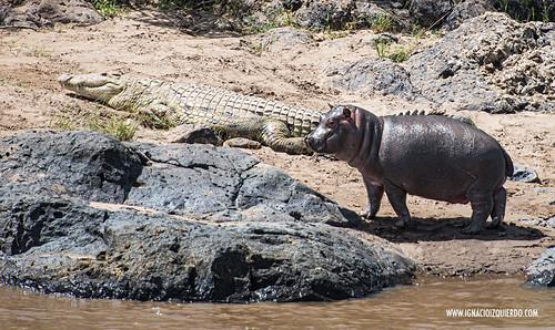 Kenia - Masai Mara 42