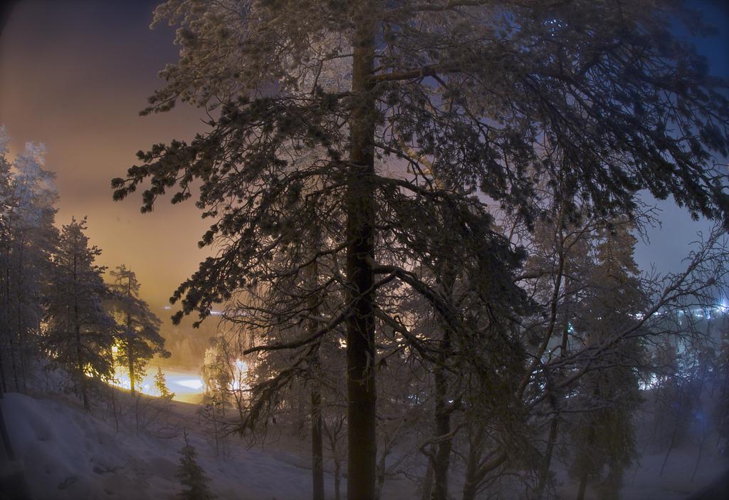 10. Noche de magia en el bosque ártico. Pyhä, Laponia finlandesa. Autor, Antti Merivirta