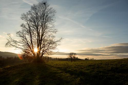 sunset sun tree nature schweiz switzerland sonnenuntergang natur jura sonne baum lesreussilles
