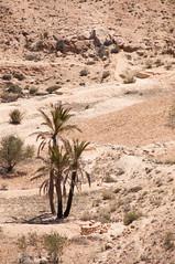 Túnez - Desierto de roca