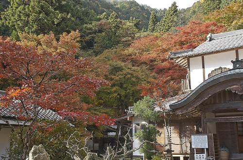 【写真】紅葉 : 古知谷阿弥陀寺