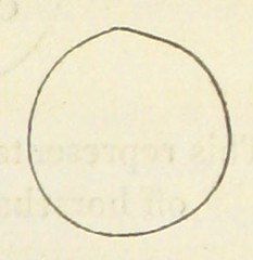 Image taken from page 499 of '[Travels in Egypt and the Holy Land.]'