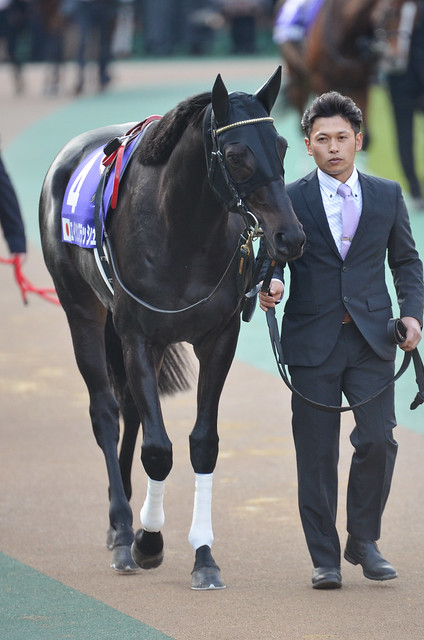 Eishin Flash, Japan Cup Paddock