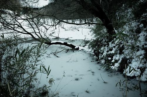 散策 [舞岡公園] : RICOH GR x ブリーチバイパス