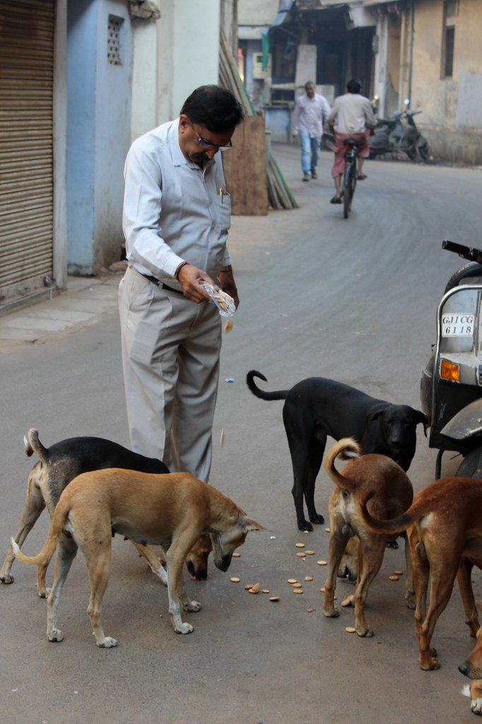 essay on problem of stray dogs Problems stray dogs cause in their jurisdiction this would normally  control in a  manner that would pose a problem to the community and/or the environment.