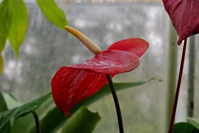 Margaret C Ferguson Greenhouses Wellesley College Botanic Flickr Photo Sharing