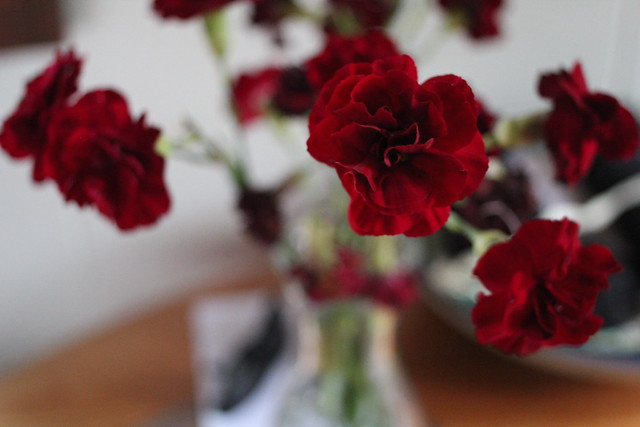 Wednesday: red carnations never die
